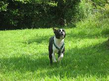 Canine Epilepsy Info