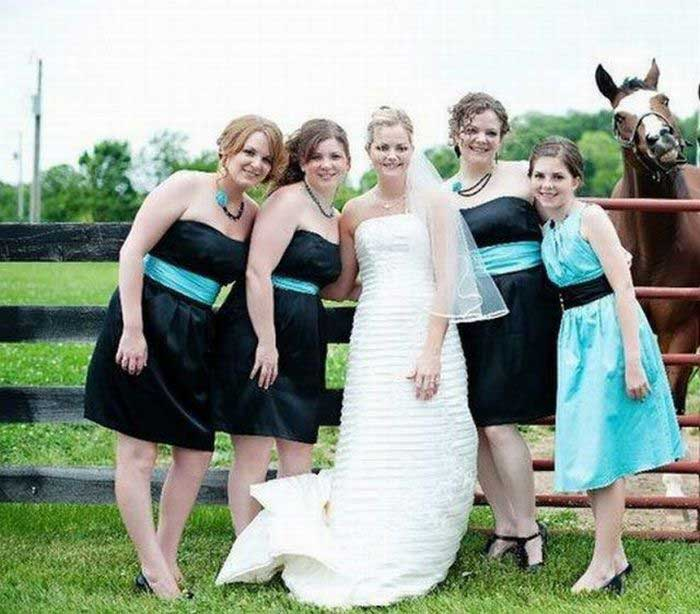 Images Comiques - Page 12 Horse%2Bwedding