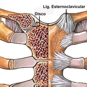 Anatomia 1c Miembro Sup Rior Articulaciones