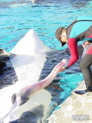 http://2.bp.blogspot.com/_fAJIWY5uxME/Rxrc7rZnLzI/AAAAAAAAC7I/xCl82Wo0EJM/s400/04oct9-killer-whale-penis.jpg
