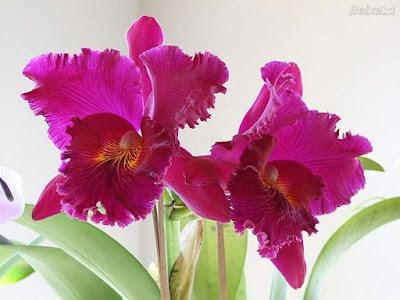 orquideas fotos