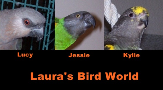 Laura's Bird World