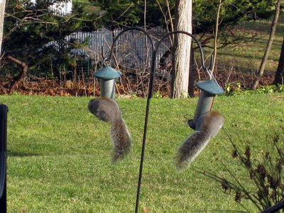 squirrels on birdfeeder