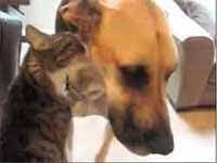 Chloe le da un bañito a Ted (Precioso)