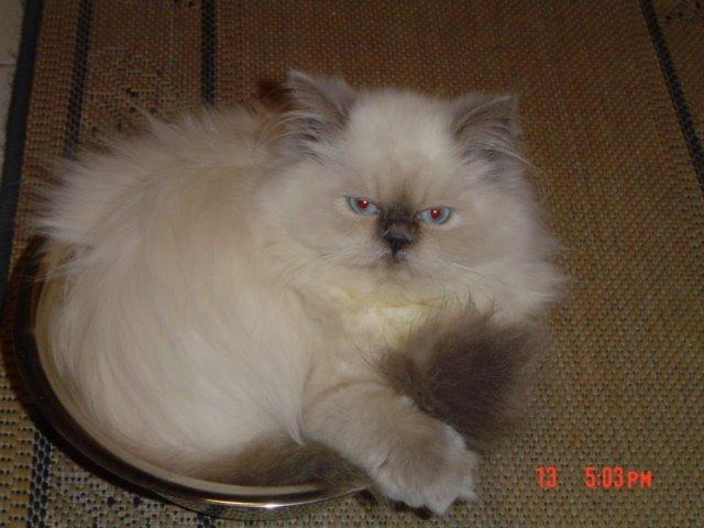 ULISSES, outro gato porteño ...