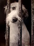 NO AL MALTRATO DE ANIMALES!!!!