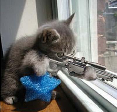 killercat2.jpg