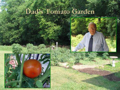 Dad's Tomato Garden Journal ©