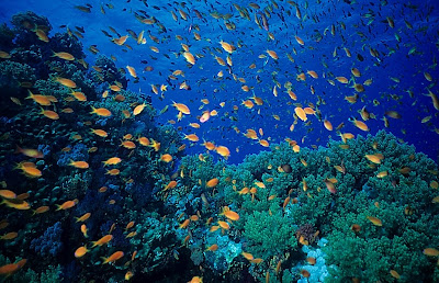 Red Sea reef scene