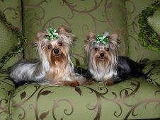 Gracie & Heidi