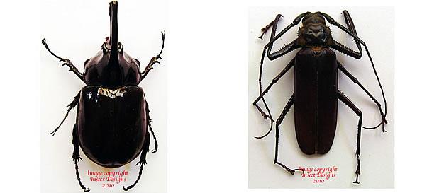 Faunistic Studies on Scarabaeoidea (Aphodiidae, Cetoniidae ...