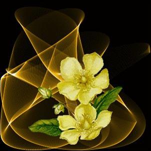 Montagem De Fotos Flores Lindas - Fotomontagem com flores coloridas Montagem de fotos