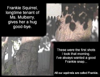 Frankie Squirrel