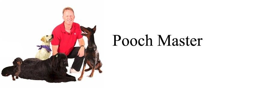 Pooch Master - Sam The Dog Trainer- Dog Training - Behaviorist