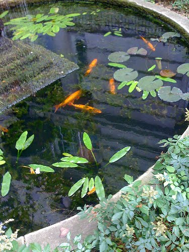 Pond Liner Blog Utilize Pond Filters For A Healthy And