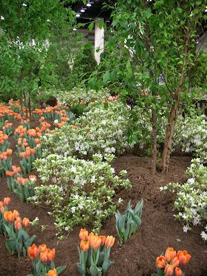 Garden Thyme With The Creative Gardener