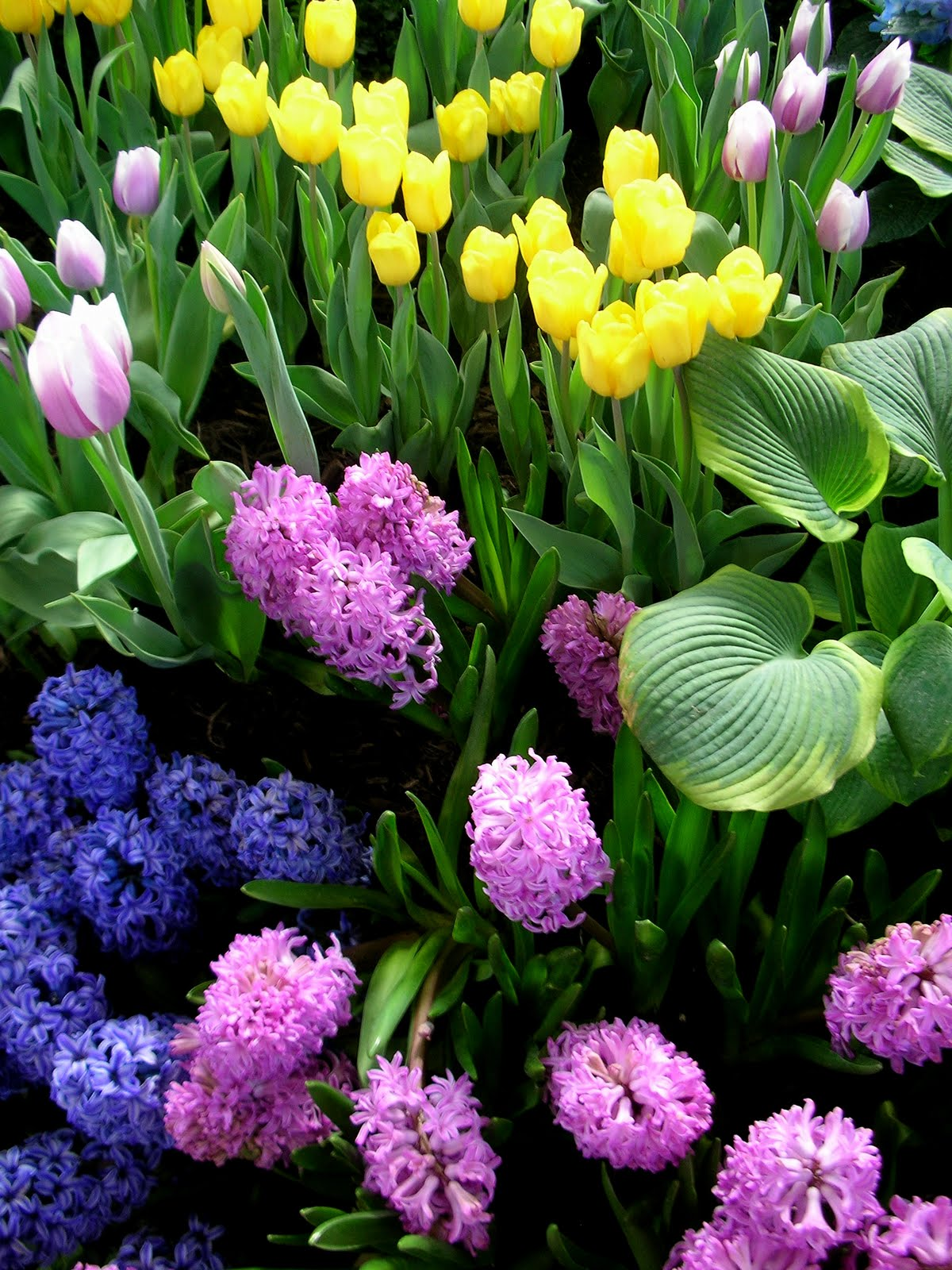 Garden Thyme With The Creative Gardener Planting Bulbs