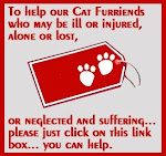 Help Kitties!!!