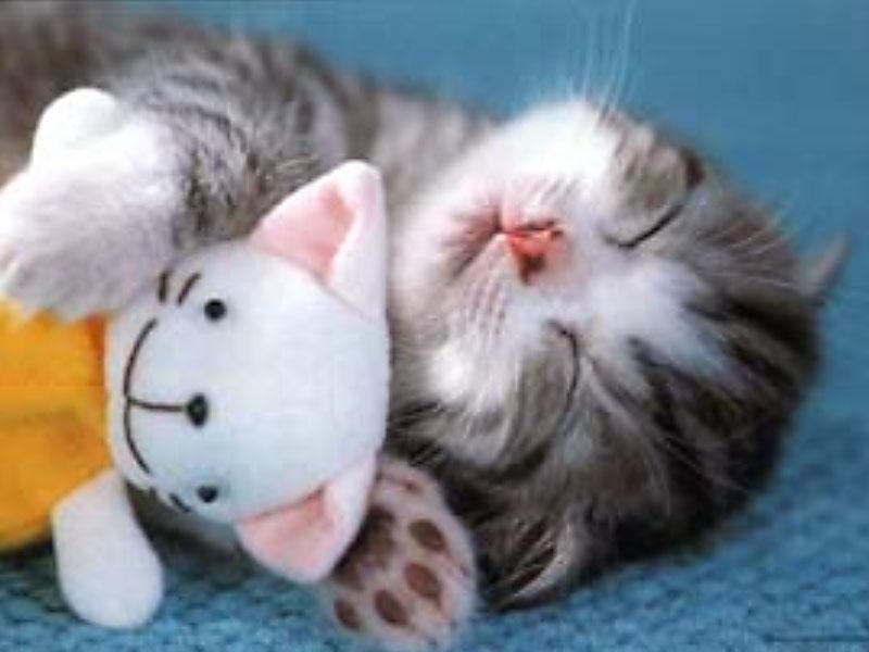 Cute Animals- Kittens