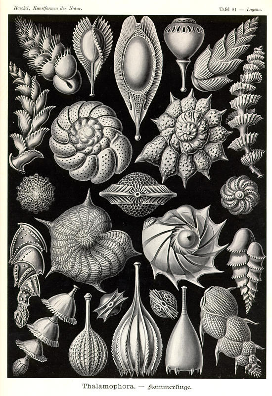 edge of the plank my ernst haeckel transcription. Black Bedroom Furniture Sets. Home Design Ideas
