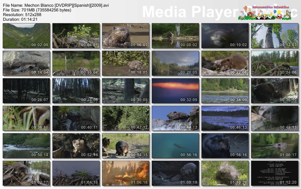 Mechon Blanco Las Aventuras Del Pequeno Castor[DVDRip][Spanish]