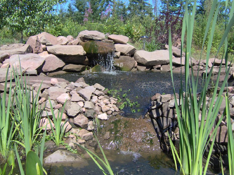 How To Take Care Of Goldfish In A Garden Pond Goldfish Care Information Diseases And Treatments