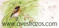 Avestrazos Web