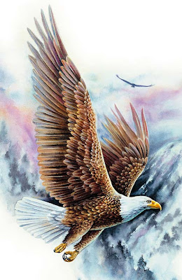 حكاية النسر لأخذ العبرة soaring_US_bald_eagle_1A.jpg