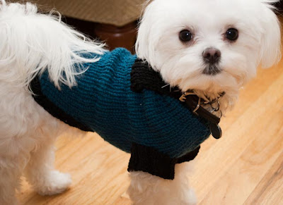 Maltese Dog Knitting Pattern : Snuggie Dog Sweater Free Knitting Pattern from the Pets Free Knitting Pattern...
