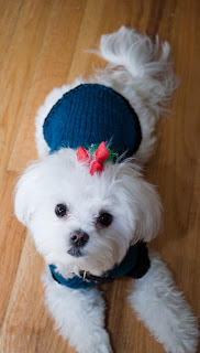 Preview This Free Knitting Pattern: Snuggie Dog Sweater