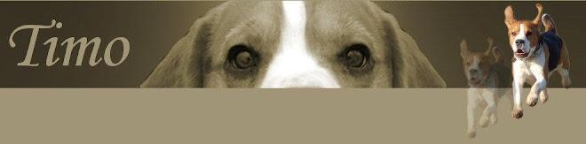 Beagle Timo's Dagboek