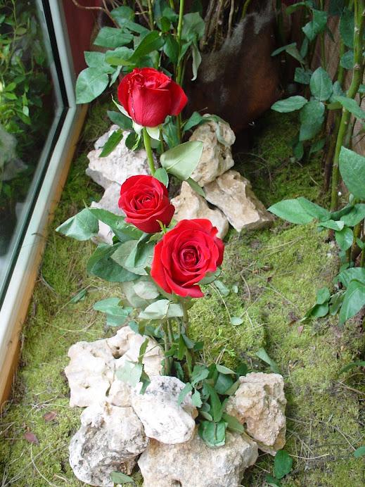 Rosas 2008