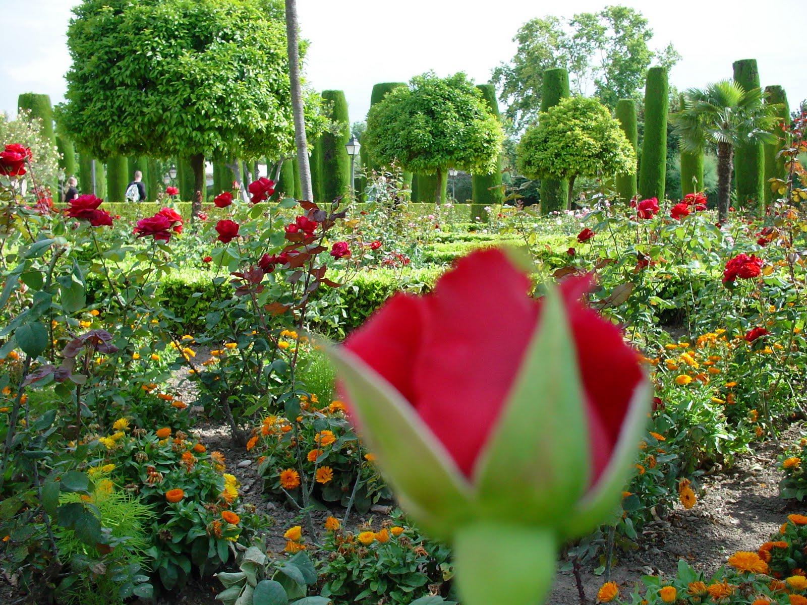 El poeta peregrino luci rnagas en el jard n for Luciernagas en el jardin libro