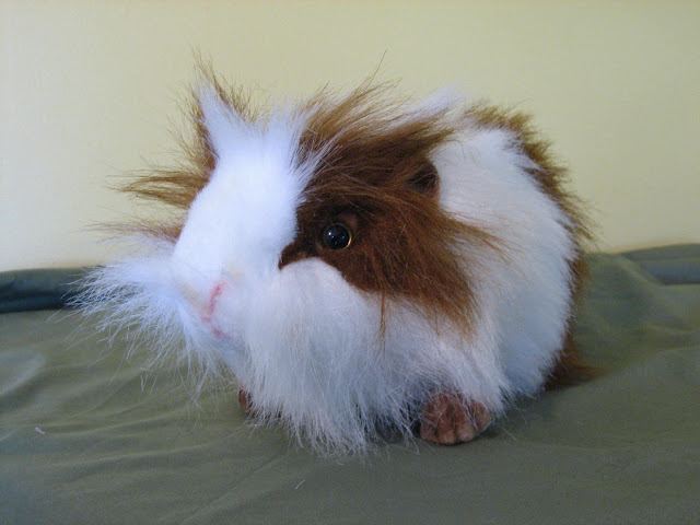 large brown and white guinea pig