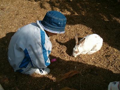 a cute rabbit
