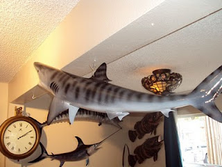 3d fish mounts catfish yellow eye snapper tiger shark for Mount this fish company