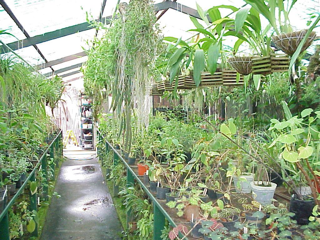 Encinas cuarto a for Plantas que hay en un vivero