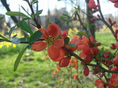 Un pom cu flori rosii