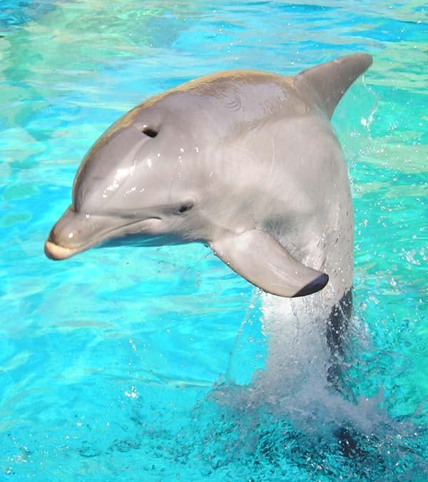Animales del mar animados - Imagui