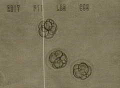 3 Good Embryos