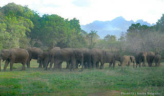 Elephants seen from the Tree hut