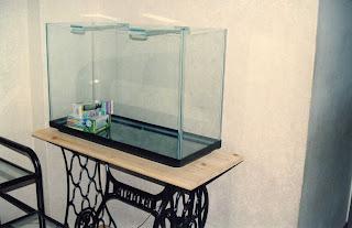 como montar tu acuario