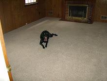 Lila LOVES the new Carpet