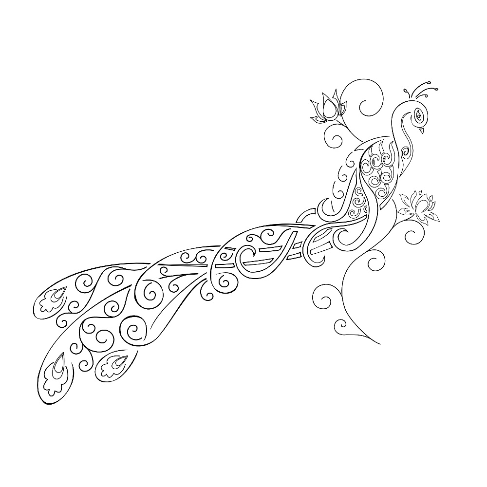 Peacock Body Outline Patterns for body and stencils Peacock Pattern Outline