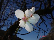 Primavera Malagueña