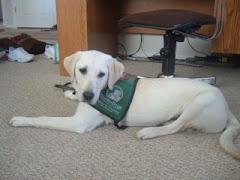 1st Puppy