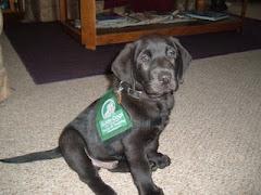 2nd Puppy