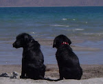 I love this picture of our cute puppies! It was at Bear Lake when we first got them!