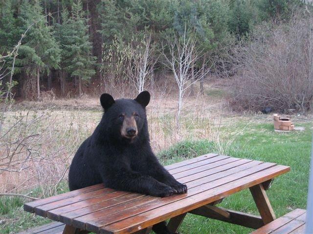 [bear.bmp]