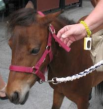 Mini Service Horse